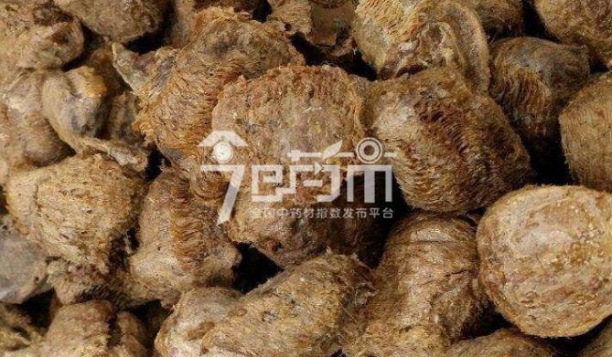 桑螵蛸的人工养殖技术以及桑螵蛸图片