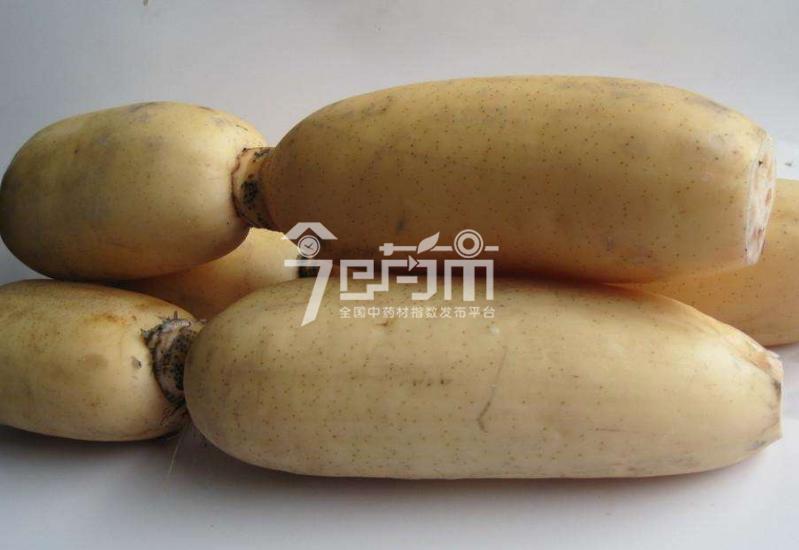 中药材莲藕图片
