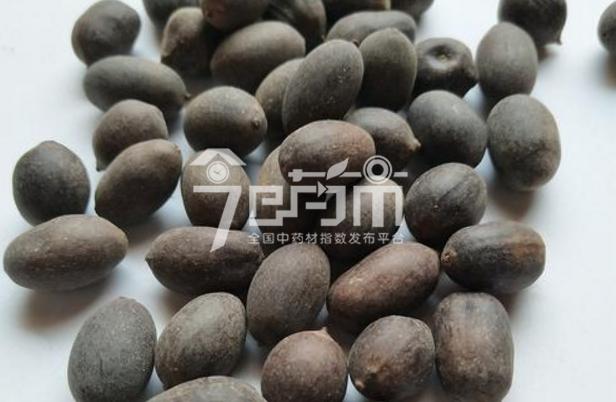 中药材石莲子图片