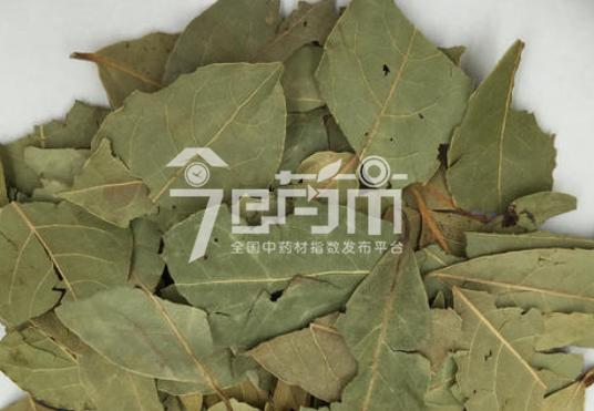 香叶种植技术与管理以及香叶图片