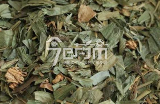 淡竹叶功效与作用以及淡竹叶图片