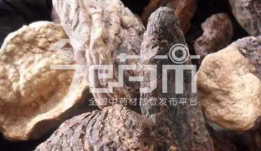 肉苁蓉食用方法与肉苁蓉图片