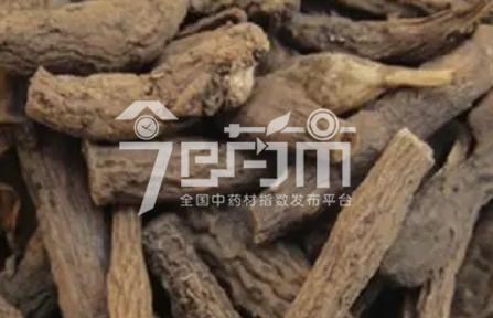 仙茅泡酒的方法以及功效与作用以及仙茅图片
