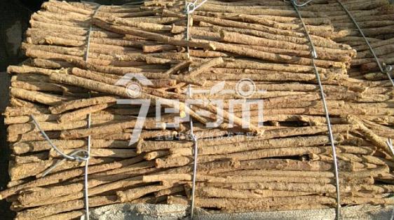 岷县药材市场33元/kg成交的黄芪节子(皮麻)