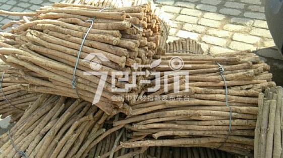 岷县药材市场40元/kg成交的黄芪节子(略麻)