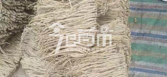 渭水源药材市场48元/kg成交的党参(规格0.5-0.6)