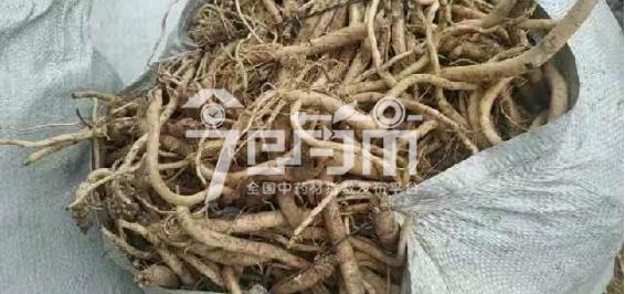 渭水源药材市场11.4元/kg成交的鲜党参(条形短)